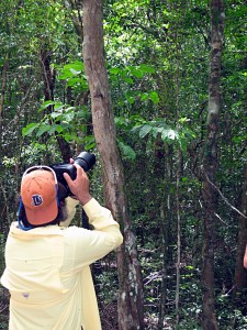 Manuel Leal photographing two Puerto Rican giant anoles.