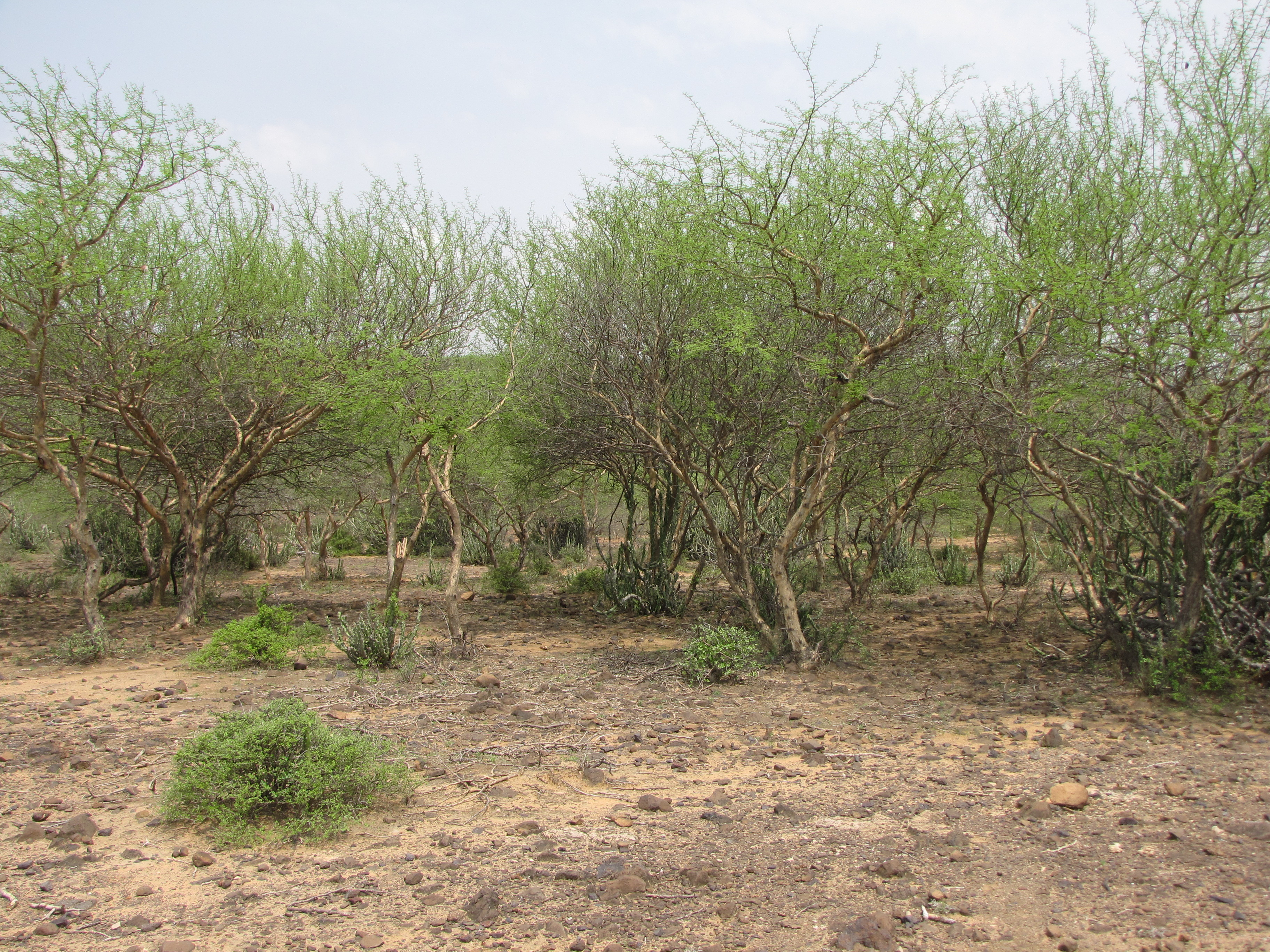 Tropical thorn forests and scrubs animals