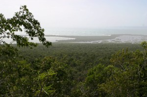 The coastal dry forests of the Hellshire Hills, part of the Portland Bight Protected Area source:http://www.flickr.com/photos/cyclura/3267735122/