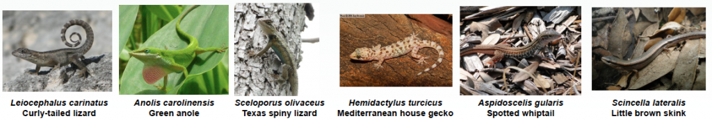 The six species examined by Robinson and colleagues.