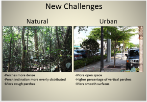 Major differences between natural and urban habitas