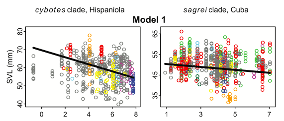 Body Size - Elevation Relationships in Hispaniolan (cybotes clade) and Cuban (sagrei clade) anoles. The x-axis is elevation (on the log scale). The colors represent individual species within each clade.