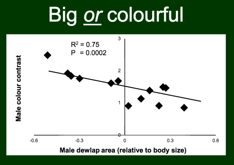 Danielle found a negative correlation between dewlap color contrast and dewlap area (after controlling for lizard body size)