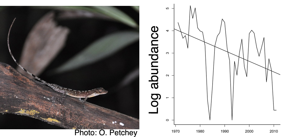 Left: A. apletophallus. Right: Decline in abundance of A. apletophallus on BCI