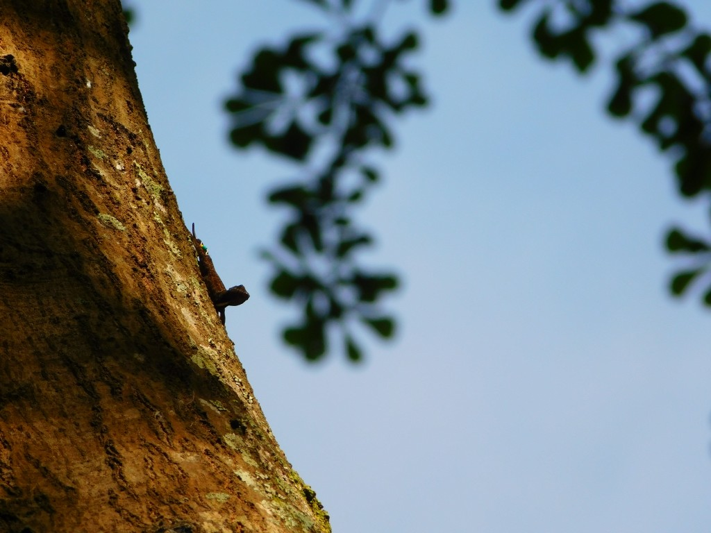 A brown anole perching pretty high.