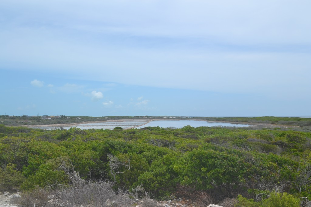 Duncan Town salina and tropical dry scub habitat