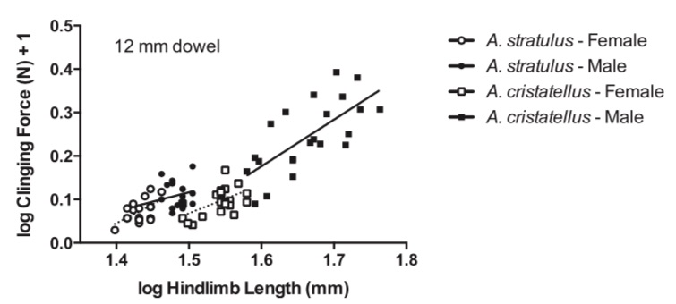 Figure 4 from Kolbe (2015): hindlimb length is correlated with cling force and this varies with species and sex.
