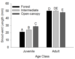 Body size variation between macrohabitats for juveniles and adults.
