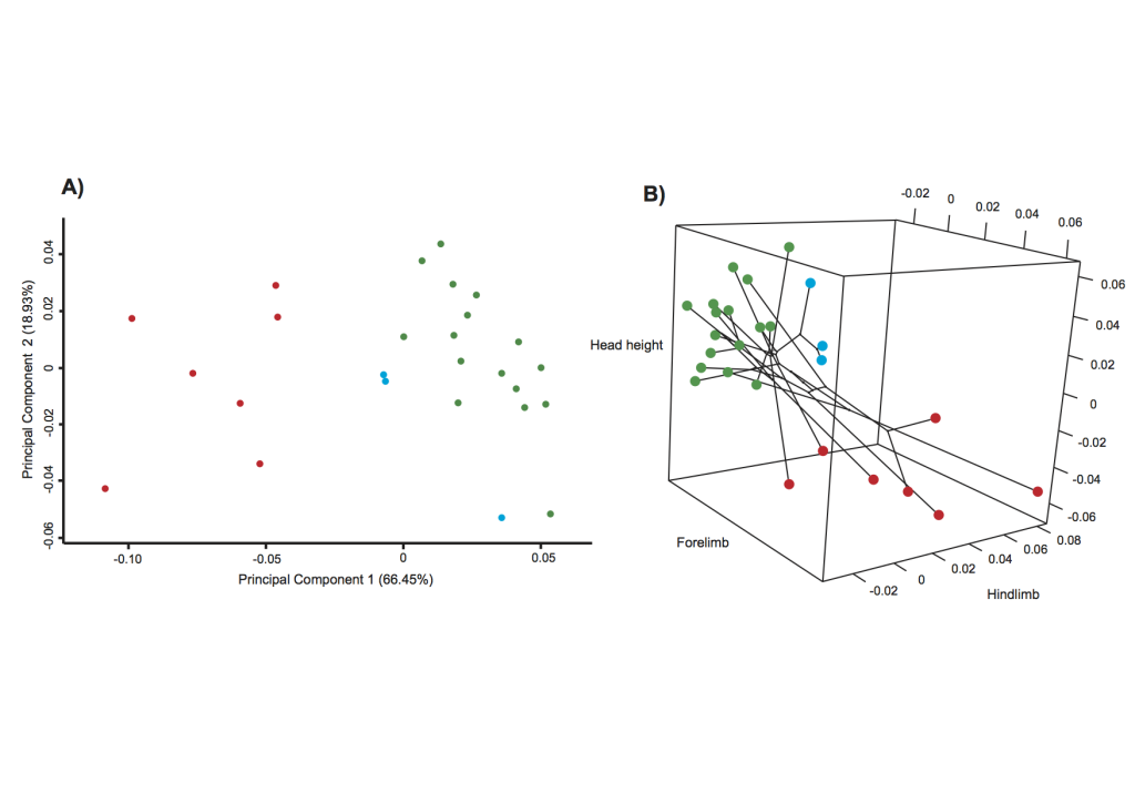 pPCA and three-dimensional phylomorphospace plot. (a) Morphological variation among species along pPC1 and pPC2, where each dot represents a species and is coloured by that species' habitat type. PC1 separates the rock specialists from the other habitat specialists. (b) Size-corrected residual scores from phylogenetic regression are plotted for each of the traits that were identified as different between habitats. Colours correspond to the habitat type for each respective species and the phylogeny is mapped onto morphospace. Regardless of phylogenetic association, species are more closely clustered in morphospace by habitat.