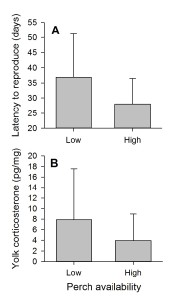 Effect of perch treatment on (A) latency to reproduce and (B) yolk corticosterone.