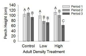 Effects of adult male density on juvenile Anolis sagrei perch height during each period of the experiment. No adults were present during period 1. Period 2 represents observations over 8 d immediately following the introduction of adults to enclosures. Period 3 represents observations over 7 d approx. 1.5 mo after adults were introduced.