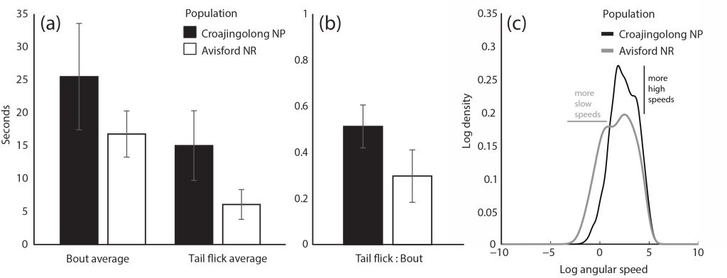 Differences in signal structure between populations. (a) Mean bout and tail flick durations for both lizard populations. (b) Mean tail flick to bout ratio for both lizard populations. (c) Average kernel density functions for both lizard populations.