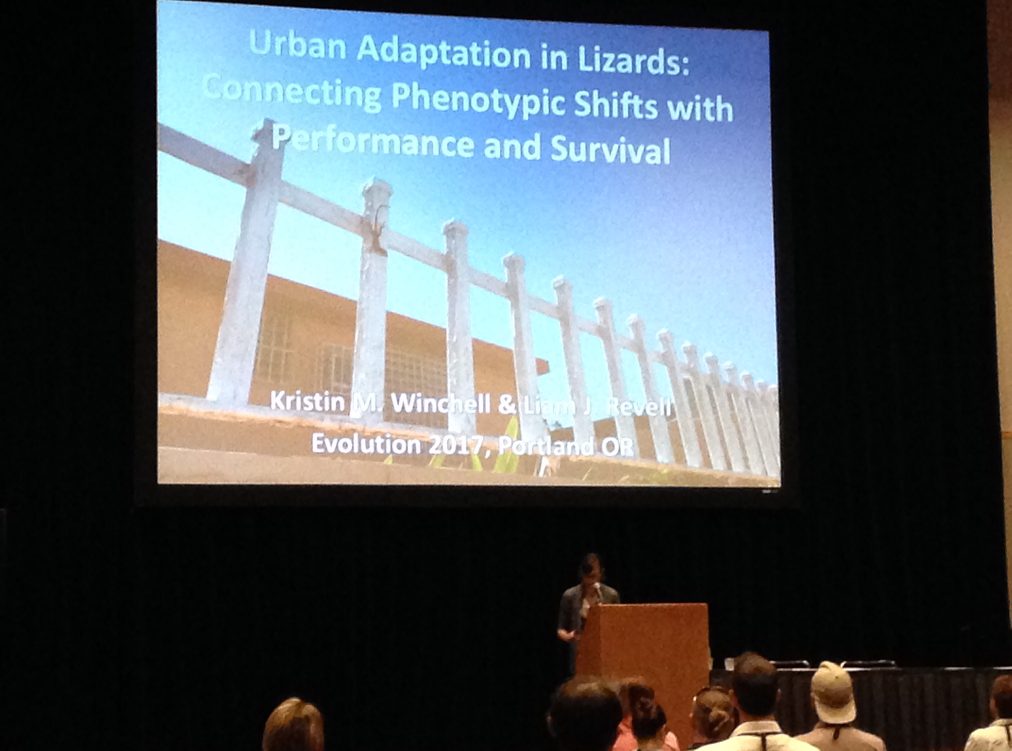 Kristin Winchell gives her talk on urban anoles at Evolution 2017.