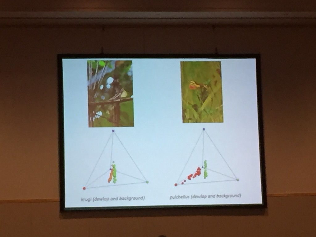 Leo Fleishman discusses color space in 4-dimensions, corresponding to the four cones in the anole eye. For each species, red dots are color of the dewlap and green dots are the color of the background, indicating that dewlaps stand out against their background.