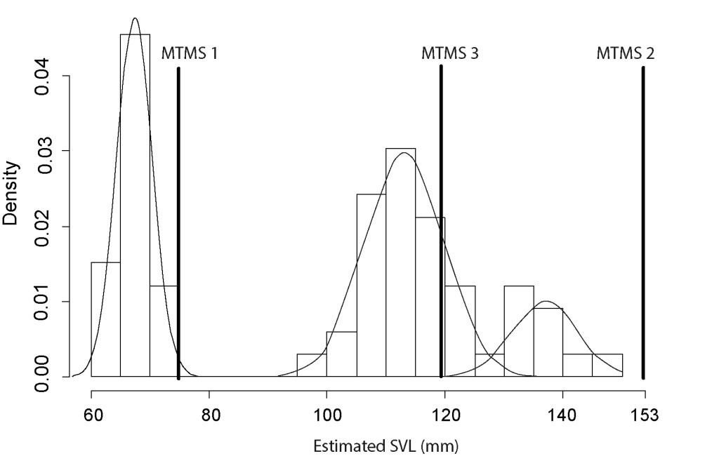 Figure 2.  SVL reconstructed on the basis of fully mature humeri (N = 66) with the results of a mixture analysis indicating a trimodal distribution. MTMS1, minimal theoretical maximal size obtained from the smallest fully mature humerus; MTMS 2, minimal theoretical maximal size obtained from the largest immature humerus; MTMS 3, minimal theoretical maximal size obtained from the smallest mature humerus included in the intermediately sized group.