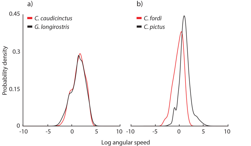 Figure 2 - Comparisons of the motion speed distributions for all species. Kernel density functions for a) Ctenophorus caudicinctus (red) and Gowidon longirostris (black), and b) C. fordi (red) and C. pictus (black), averaged within species. (Figure adapted from Ramos & Peters 2017 Journal of Comparative Physiology A)