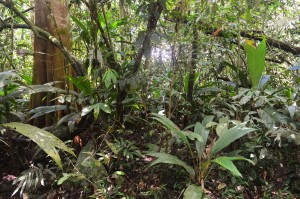 The rainforest at the La Selva Biological Station in Costa Rica