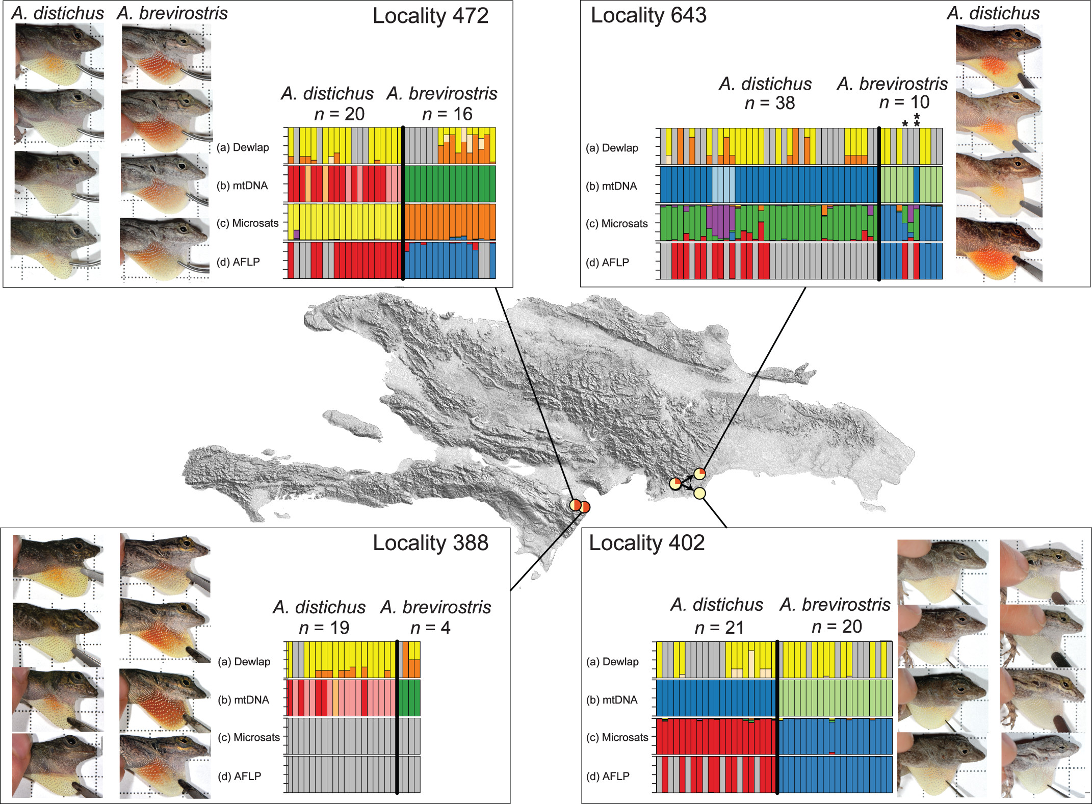 Dewlap and genetic differences between co-occurring Anolis distichus and A. brevirostris