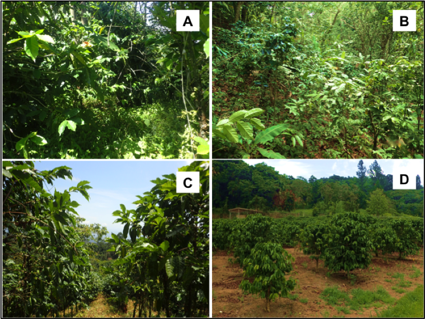 Representative photographs of diversified shade coffee in Mexico (a), diversified shade coffee in Puerto Rico (b), intensive sun coffee in Mexico (c), and intensive sun coffee in Puerto Rico (d).