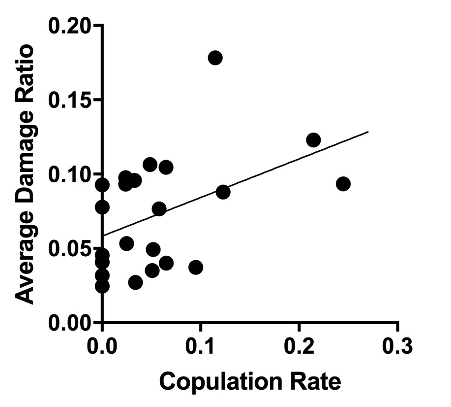 Positive correlation between observed copulation rates and the average ratio of damage of the RPM for 28 species of anole.